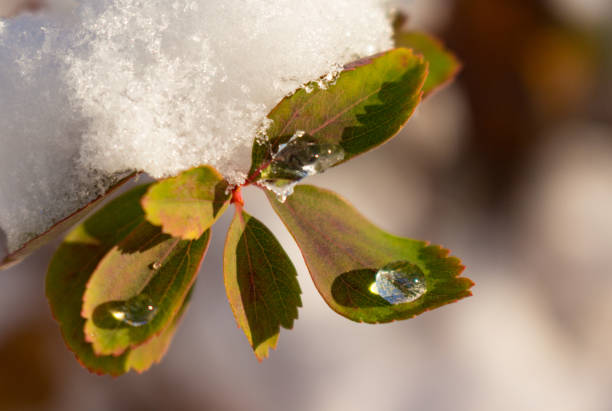 Drop of Ice on a Leaf stock photo