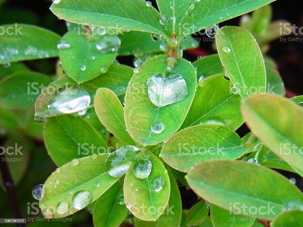 葉の上の雨の滴 ストックフォト