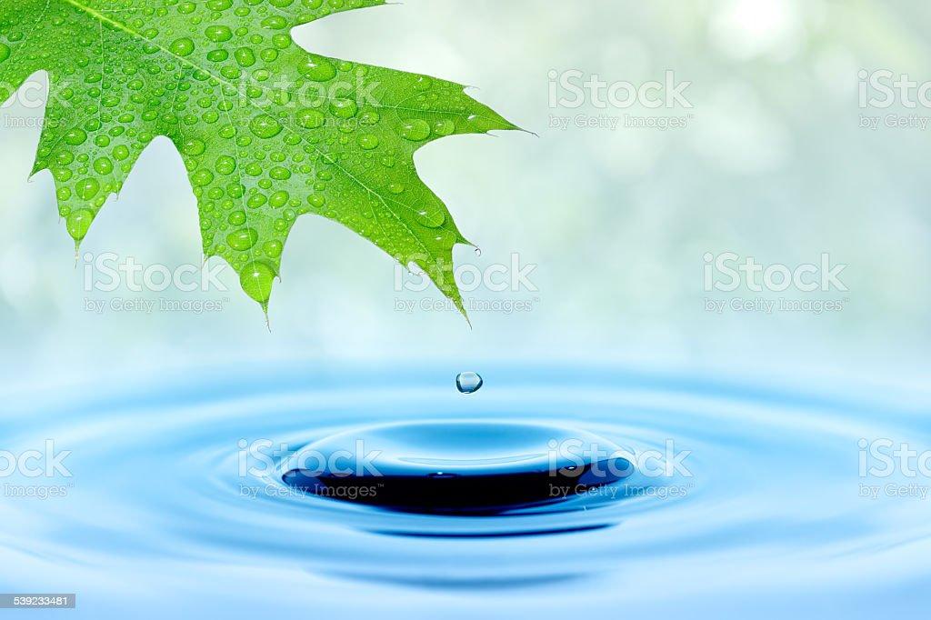 Gota de agua caída de hojas verdes foto de stock libre de derechos