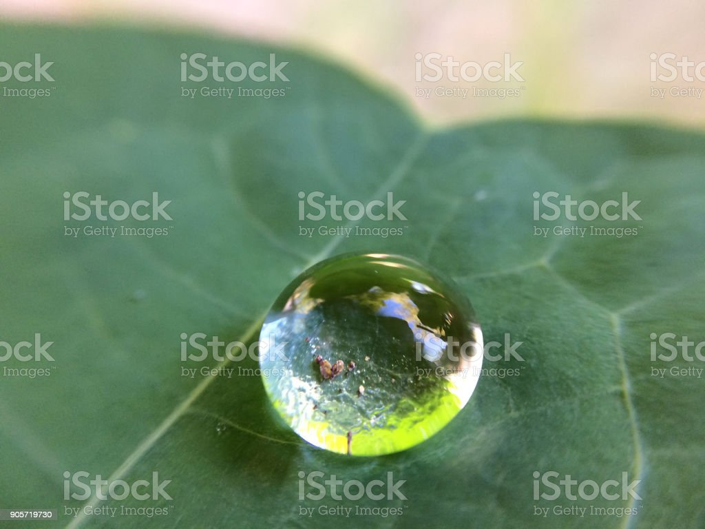 Drop of water on a leaf stock photo