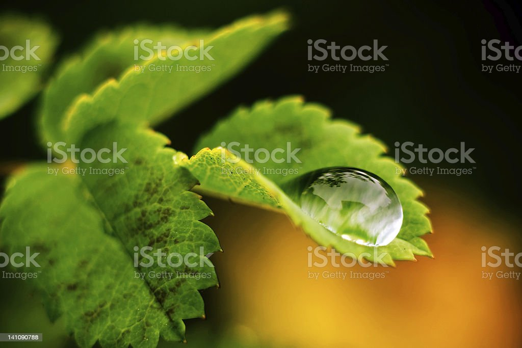 Drop of water. royalty-free stock photo