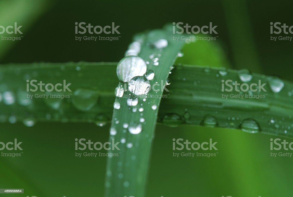 ドロップの水 ストックフォト