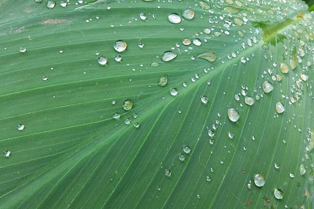 drop on green leaf stock photo
