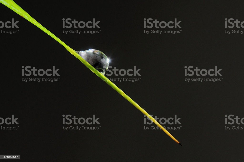 Drop on stem royalty-free stock photo