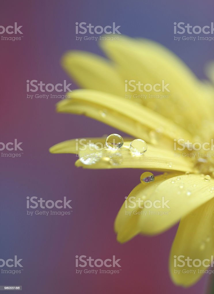 drop royalty-free stock photo