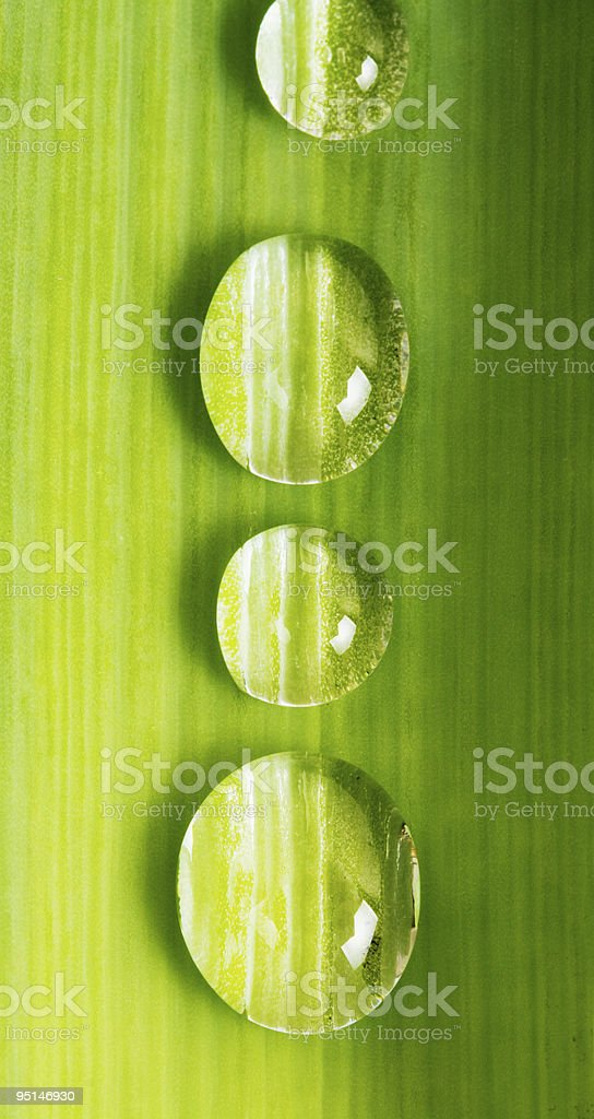 Drop  water closeup to green leaf royalty-free stock photo