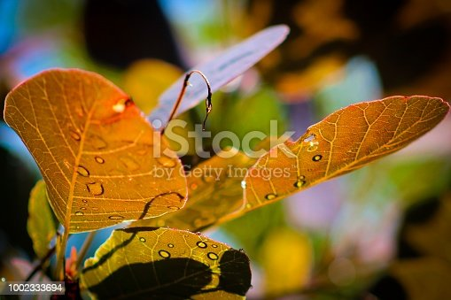 istock Droplet Mosaic on Leaves 1002333694