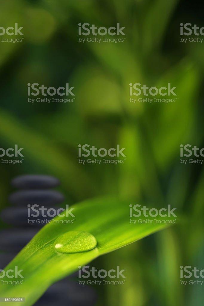 Gotitas en bambú foto de stock libre de derechos