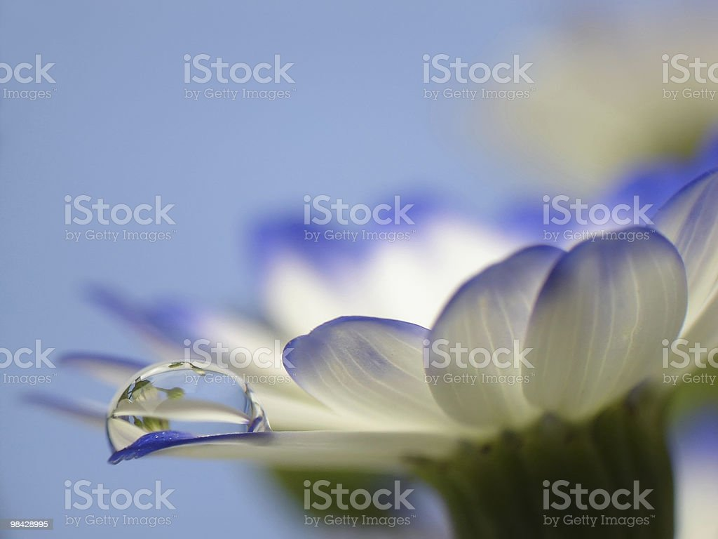 Droplet on flower royalty-free stock photo