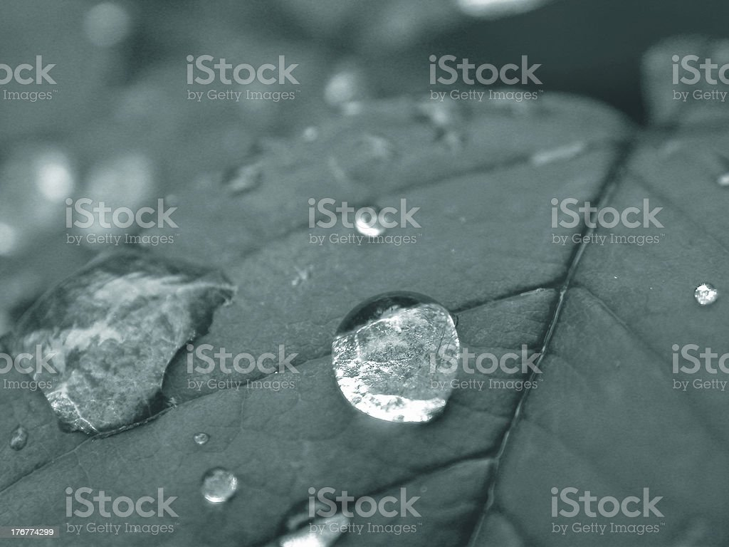 Droplets 2 royalty-free stock photo