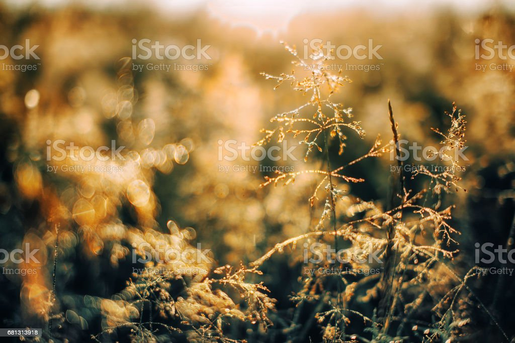droplets of dew in the sunlight royalty-free stock photo