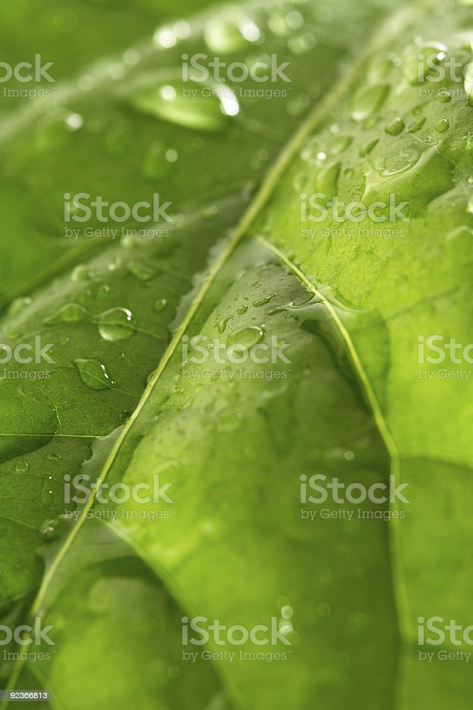 Droplets on a Leaf royalty-free stock photo
