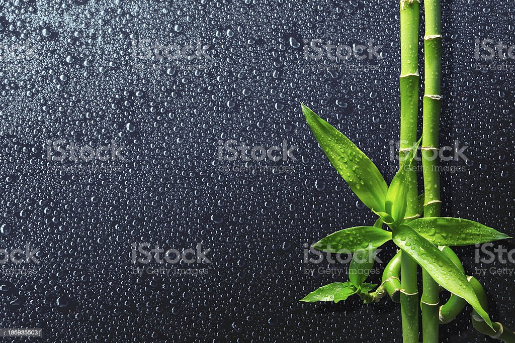 drops and bamboo on black stock photo