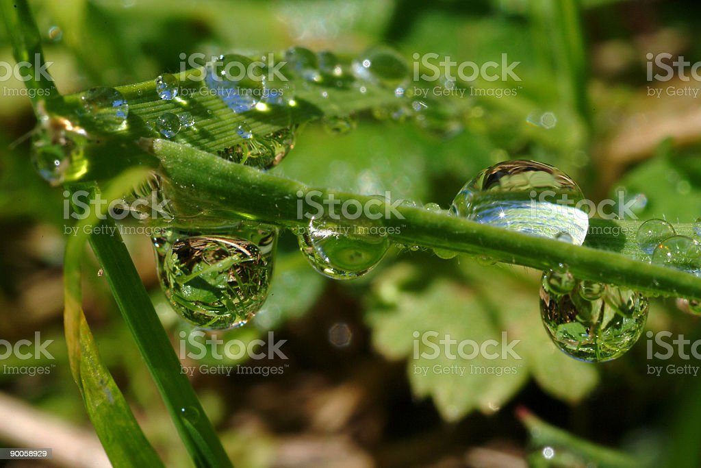 Drops in grass royalty-free stock photo