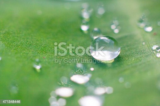 istock drops of dew on a green grass 471348446