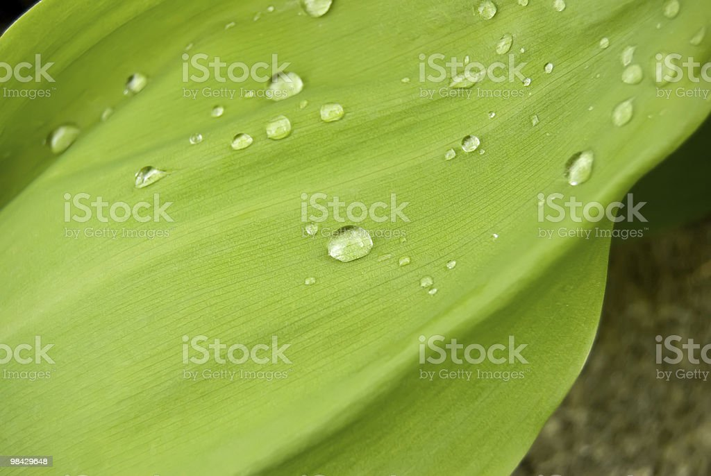 drops of dew on a green grass royalty-free stock photo