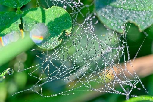 Drops of morning dew on small irregulart spider web