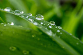 Water drop on a green leaf, fresh greens after a rain, macro shooting, a large close-up, selective focus, the place for the text, a background.