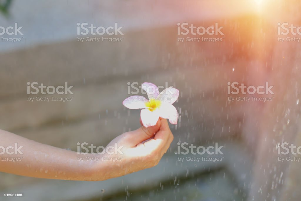 drops of water fall on flower hold by little girl on sunny day outside stock photo