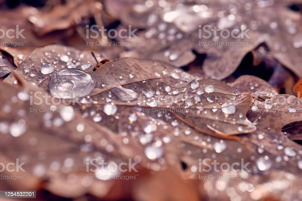 Photo of Drops of water on fallen brown autumn leaves