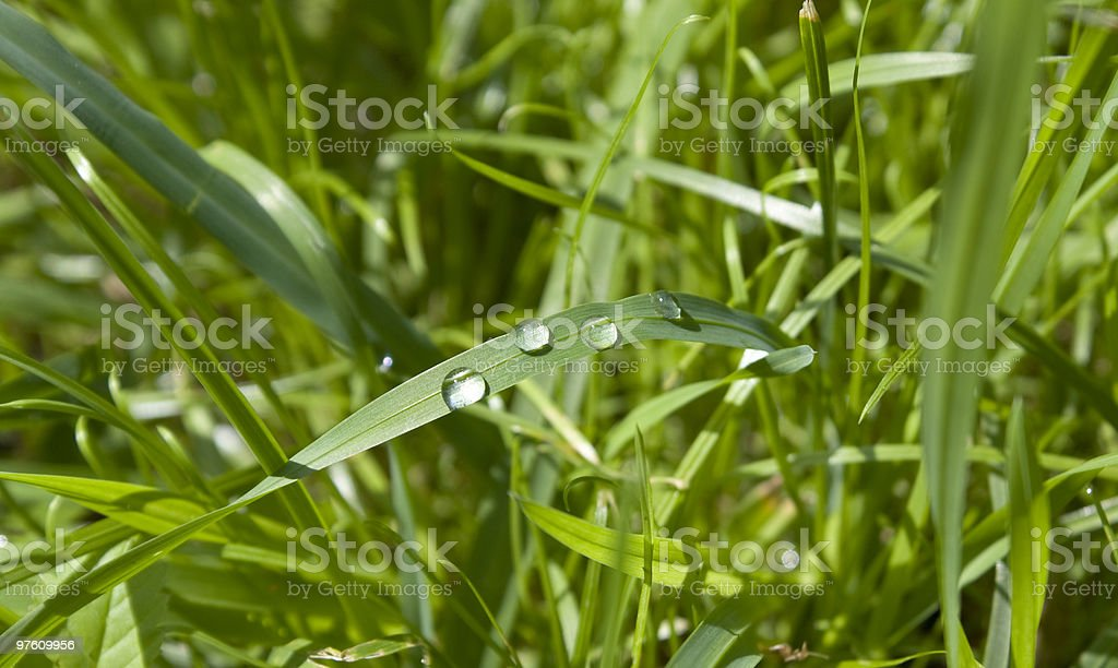 Drops of water on grass royaltyfri bildbanksbilder