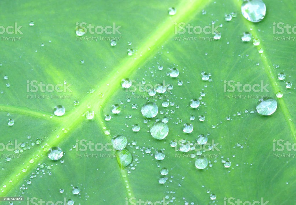 drops on green leaf stock photo