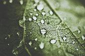Drops on leaf after rain