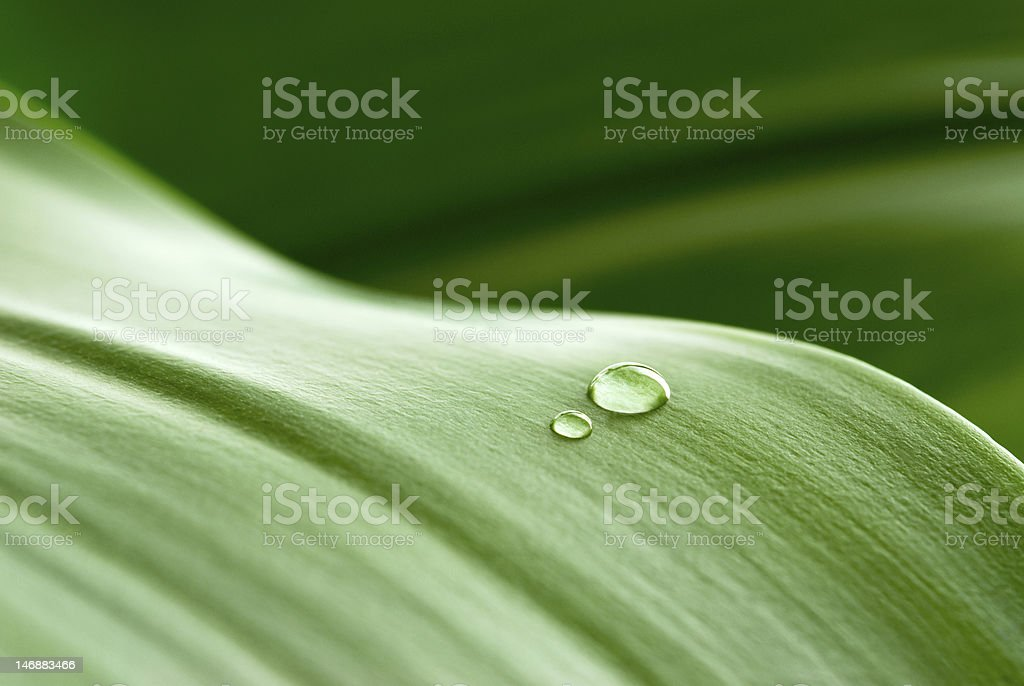 drops on leaf stock photo