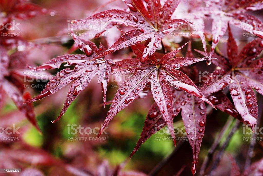 Fallen auf Roten Blätter – Foto