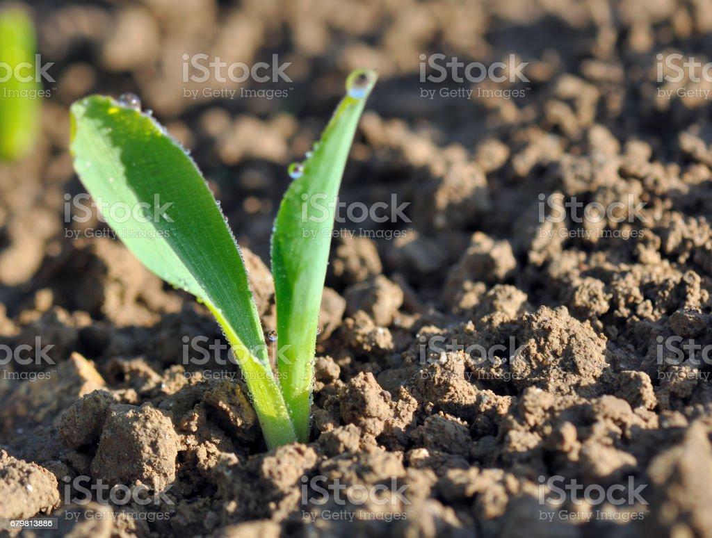 drops on seedling stock photo