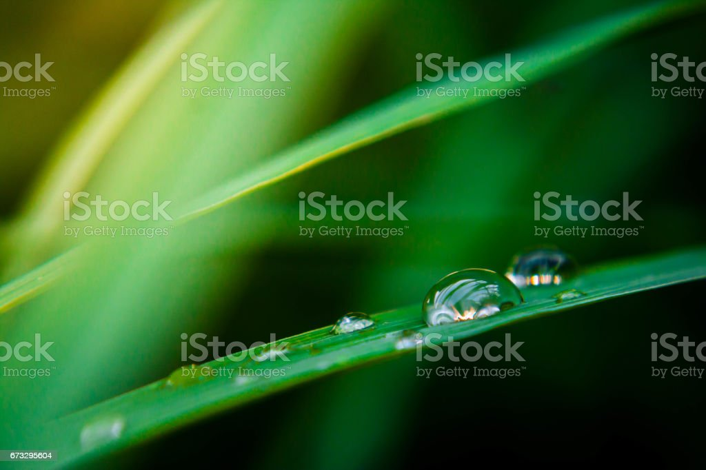 Drops on the leaves close up. royalty-free stock photo