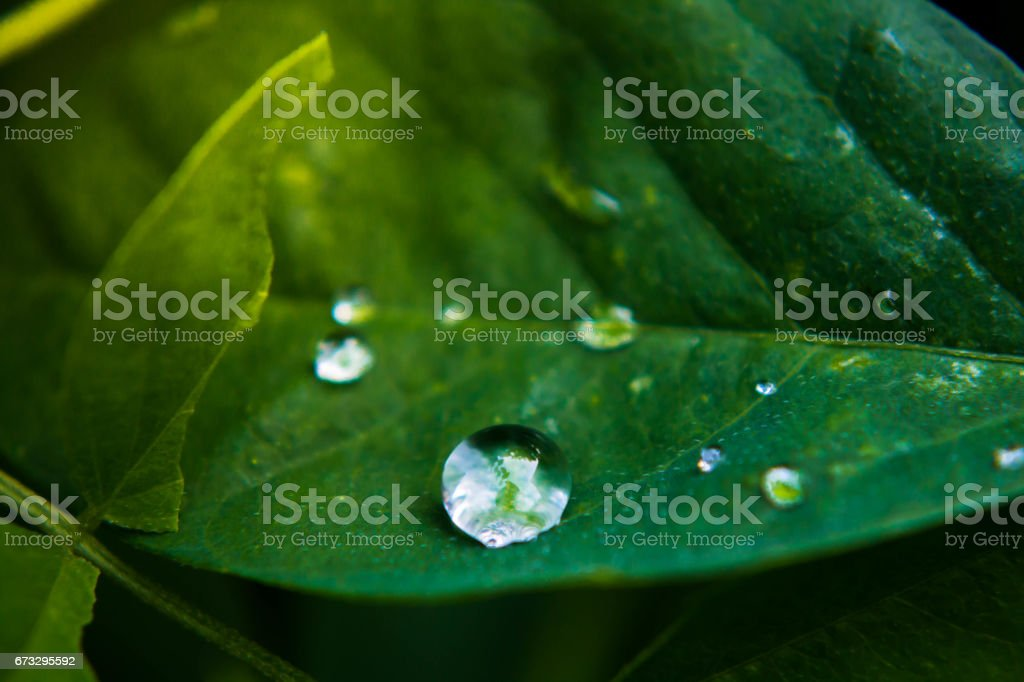 Drops on the leaves. royalty-free stock photo