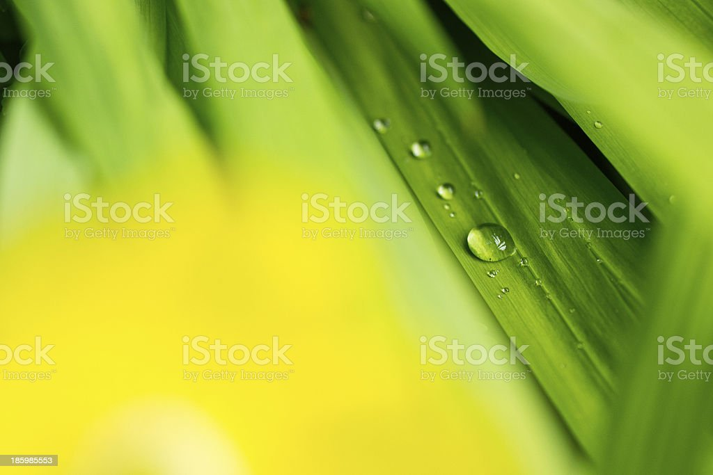 Drops on yellow and green royalty-free stock photo