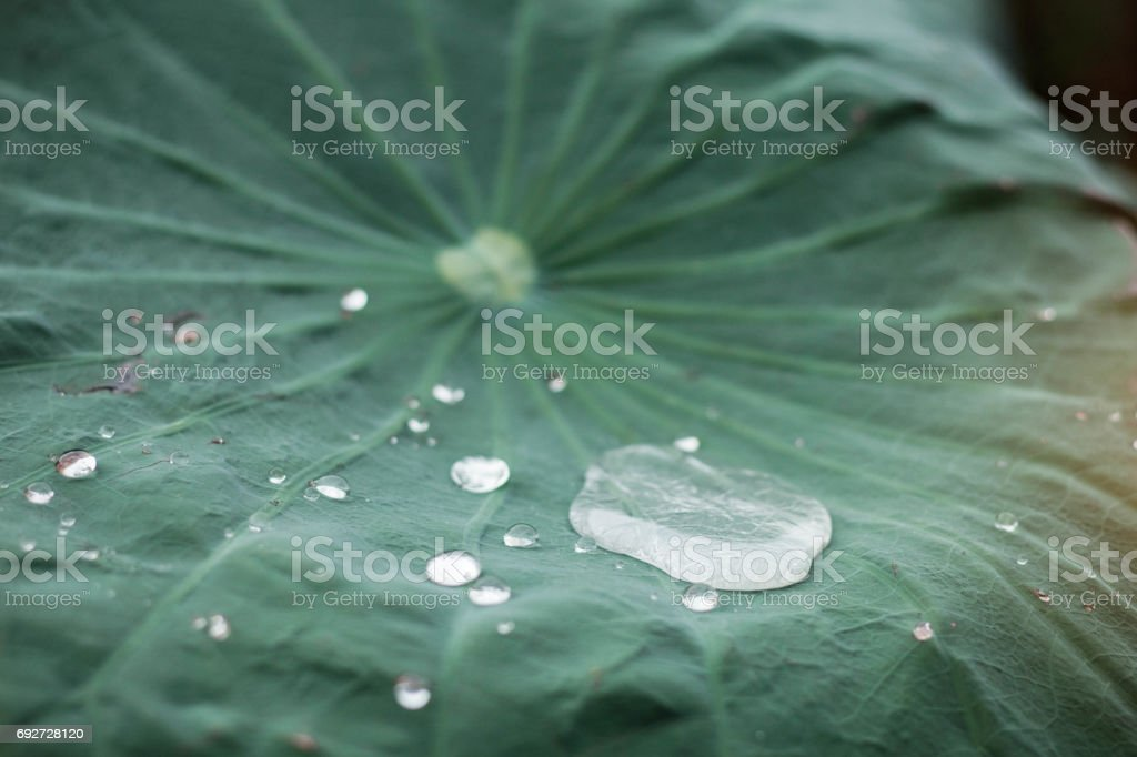 drops with green background. stock photo