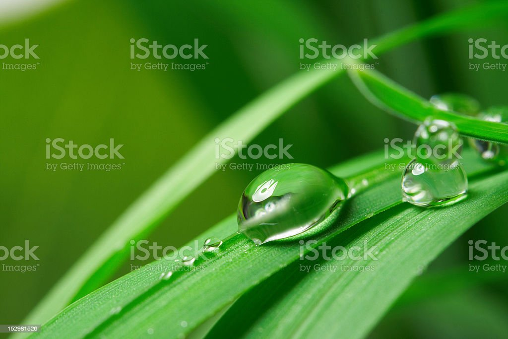 drops with green grass royalty-free stock photo
