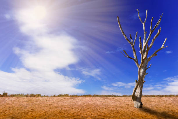 Drought beautiful. Drought beautiful. Deadvlei stock pictures, royalty-free photos & images