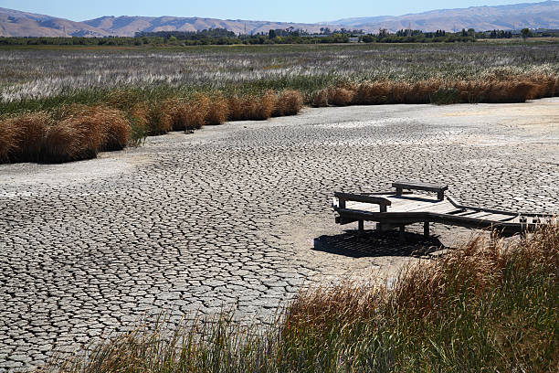 drought conditions lead to dried up marsh or riverbed - 泥灘 個照片及圖片檔