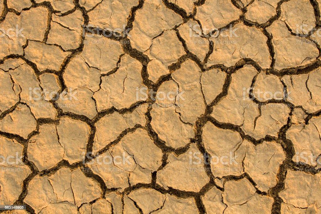 乾旱,全球變暖,環境變化突然。 免版稅 stock photo