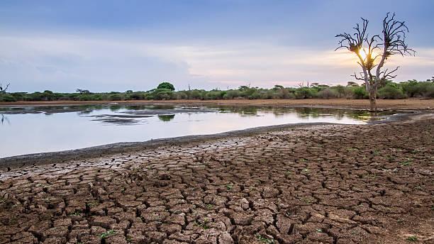 dürre im krüger nationalpark, südafrika - afrikanische steppe dürre stock-fotos und bilder