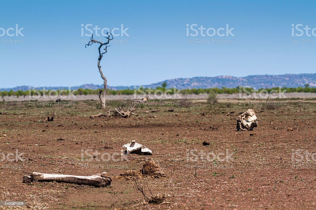 Drought in Kruger National park, South Africa stock photo