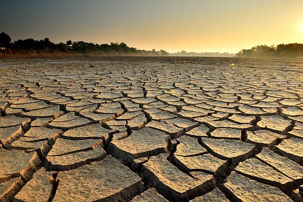 seca terra - planta morta imagens e fotografias de stock