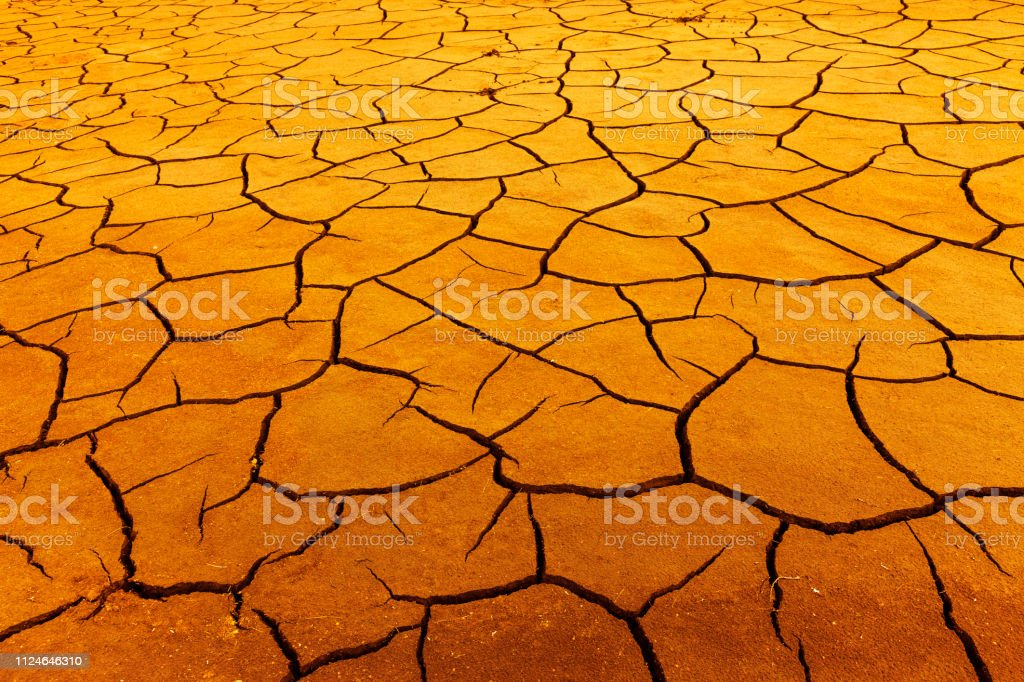 Drought in summer at a lake