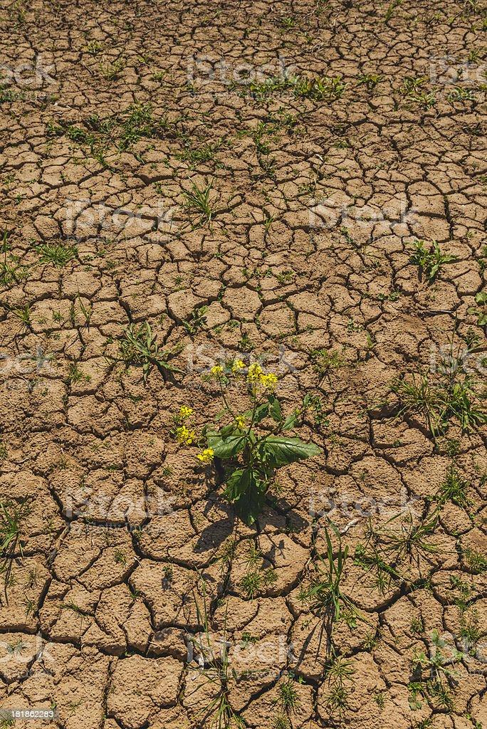 drought royalty-free stock photo