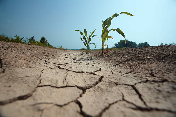 drought - kuraklık stok fotoğraflar ve resimler