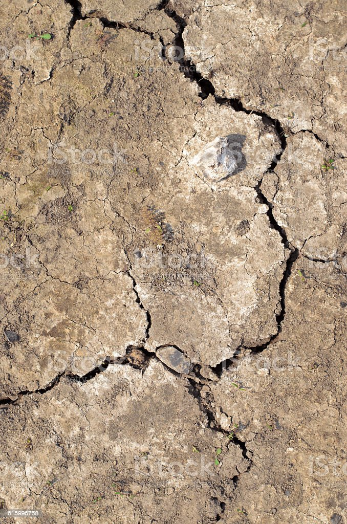 Stone which lies on the dry cracked earth