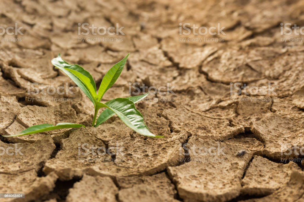 Drought - Royalty-free Abstract Stock Photo