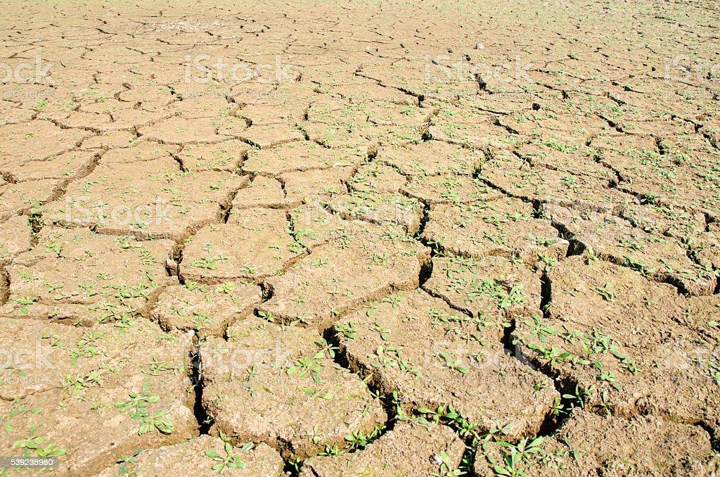 Sequía, el terreno grietas, sin agua caliente, la falta de la humedad. foto de stock libre de derechos