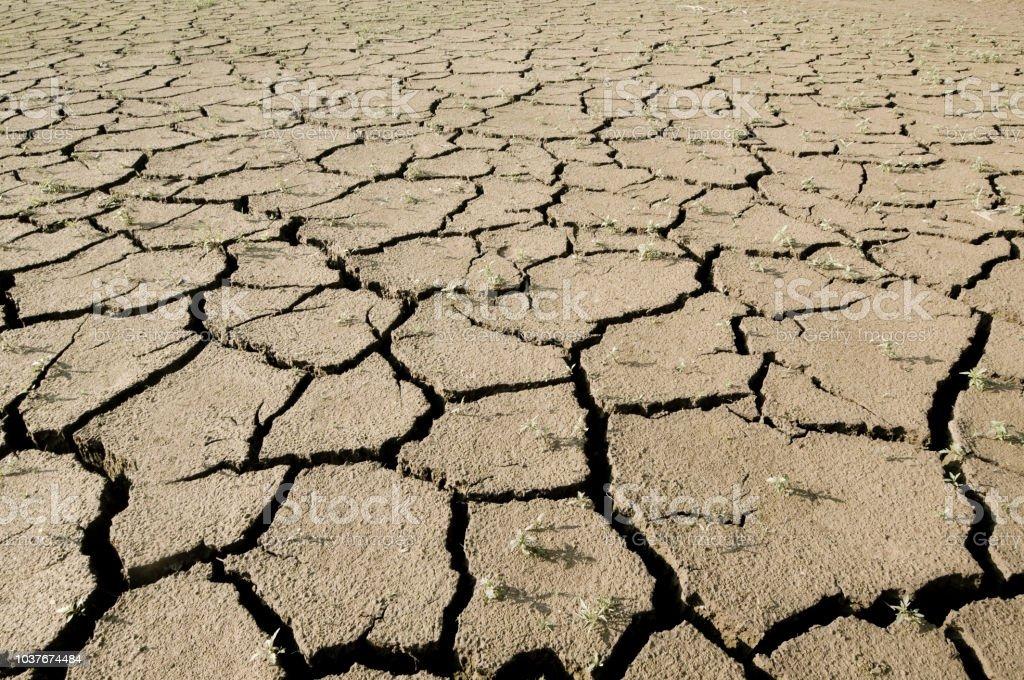 Dürre, verdorrte Erde – Foto