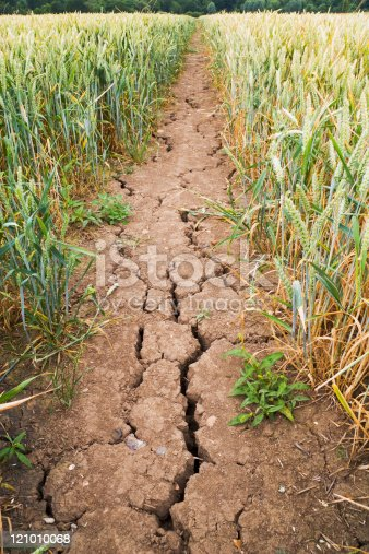 istock Drought-cracked mud on path through wheat field 121010068