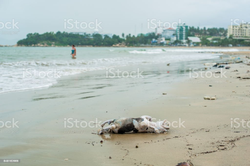 Drowned dead dog after the storm stock photo